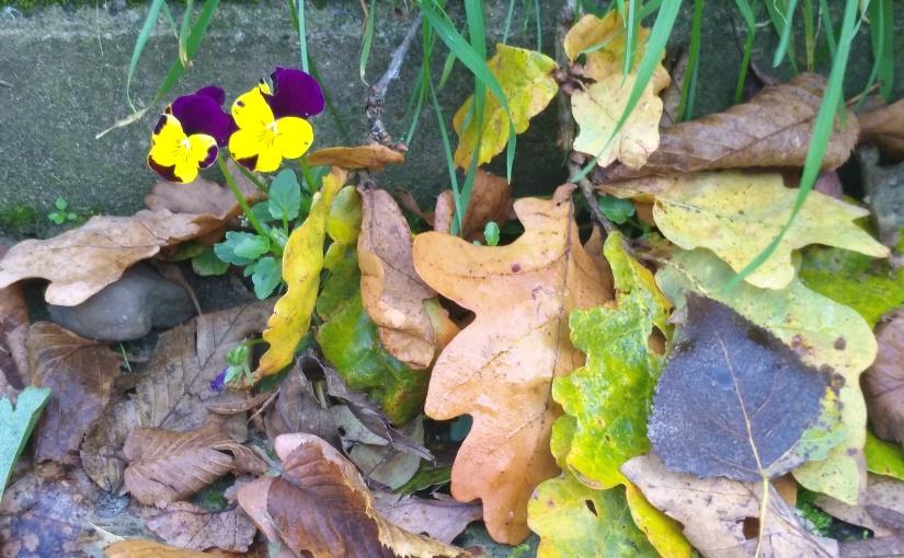 Herbst verpasst?